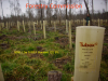 Individual protection of trees - product line TUBEX 12D