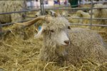 National show of livestock and agricultural equipment 2015