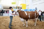 TECHAGRO-SILVA REGINA-ANIMAL VETEX-BIOMASSE 2016
